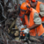 Chainsaw – Crosscutting, Maintenance and Felling Small Trees
